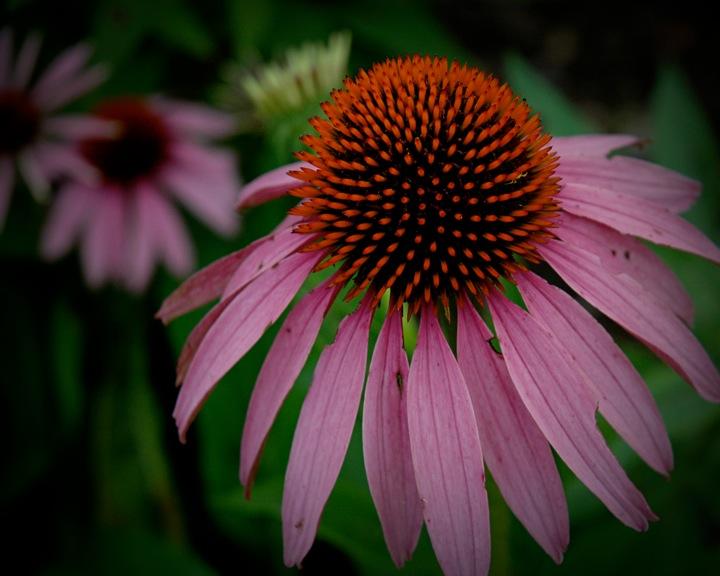 Blog Flower