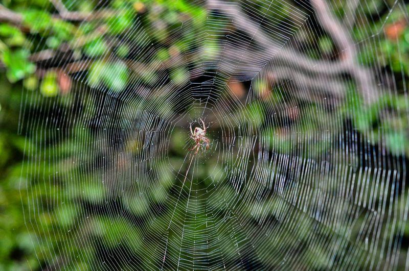 Spider-12