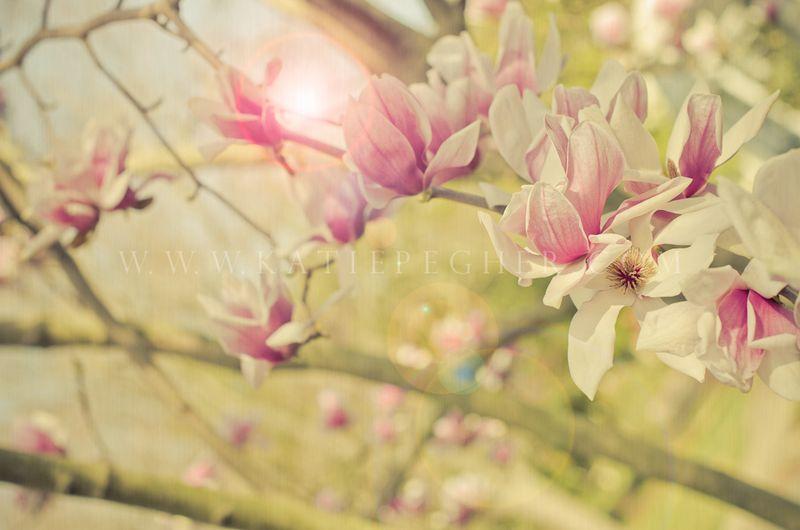 Magnolia-5-Edit